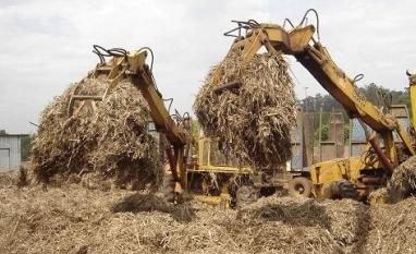 Biomassa é oportunidade para energia renovável e indústria química no País