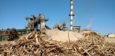 Energia da biomassa pode abastecer quase 1/3 do consumo no Brasil