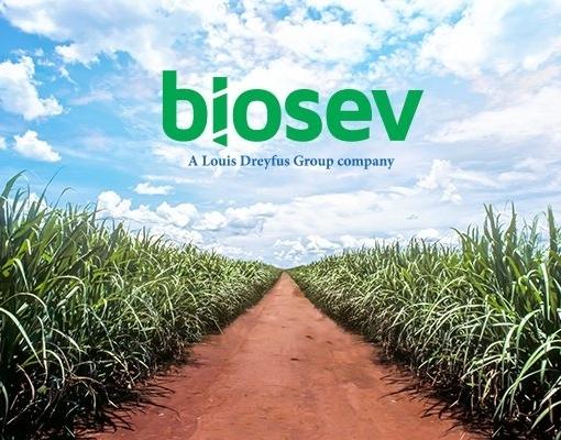 Biosev: Safra 17/18 com moagem recorde e investimento aquém do previsto