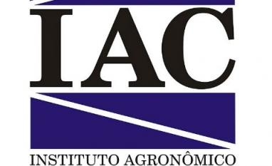 IAC desenvolve pesquisas em prol do açúcar e do produtor