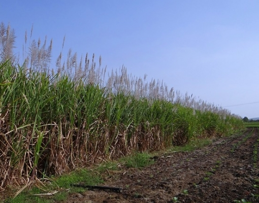 Greve dos caminhoneiros afeta a produção e comercialização de açúcar e etanol