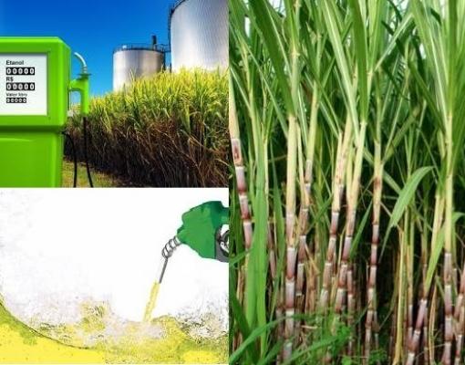 UNICA: Quebra agrícola e novo recorde de venda de hidratado marcam a 2ª quinzena de agosto