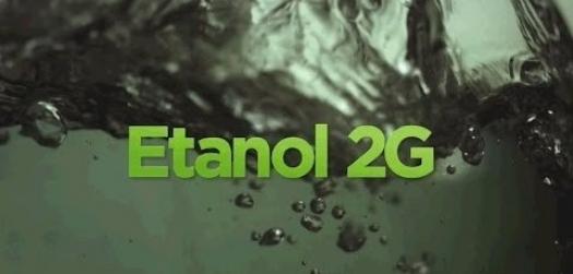 Embrapa identifica gene da cana que pode aumentar produção de etanol 2G