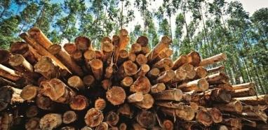 Produtos florestais sobem no ranking das exportações