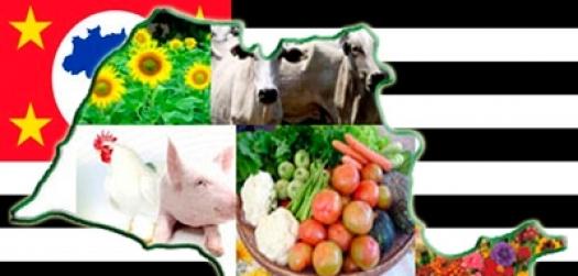 Agronegócio: Balança Comercial Paulista registra superávit de US$ 11,49 bilhões, aponta IEA