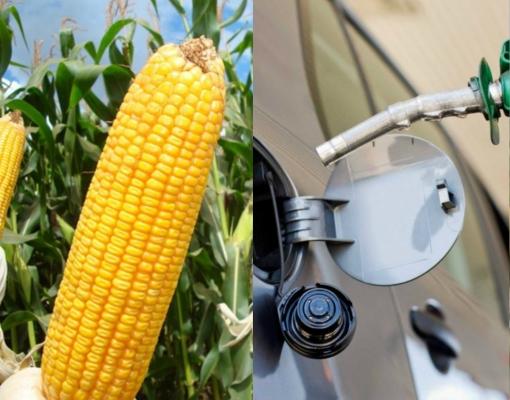MT: Nova Mutum terá usina sustentável de etanol de milho