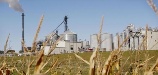 Empresários de Mato Grosso apostam na industrialização do milho