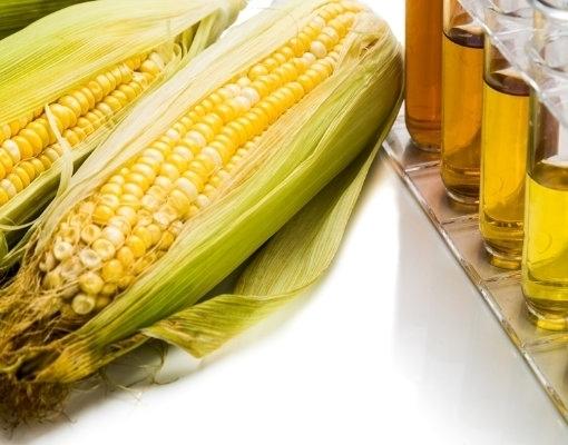 Empresas investem R$ 1,8 bilhão em duas usinas de etanol de milho no MT
