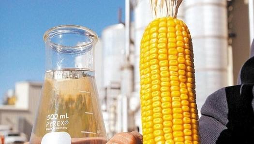 Etanol de milho: mercado consolidado