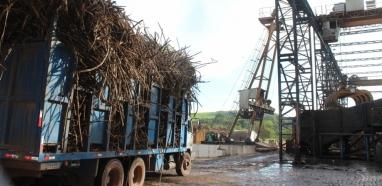 Setor canavieiro aposta na retomada da produção