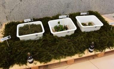 Uso de planta aquática para produzir biocombustível fomenta pesquisa e sustentabilidade em MS