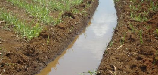 Resíduo da produção de etanol pode virar fertilizante agrícola