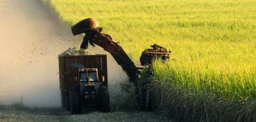 Chuvas e câmbio geram perspectivas positivas para indústria de açúcar do Brasil