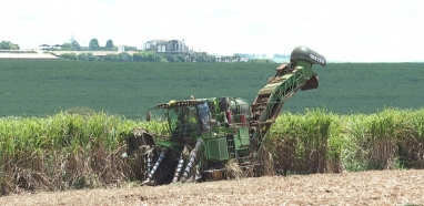 Analistas projetam moagem de cana até 3% maior e ascensão do açúcar na safra 2020/2021