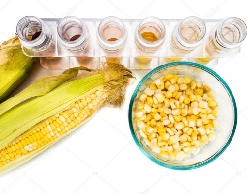 Etanol de milho, o mercado que desafia o agronegócio brasileiro