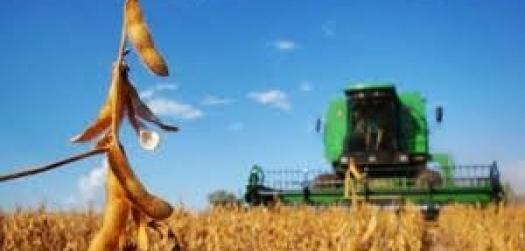 Brasil deve ser o principal player de soja nos próximos 10 anos, prevê Rabobank