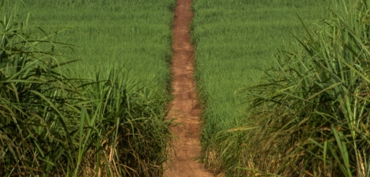 Brasil quer exportar tecnologia do etanol