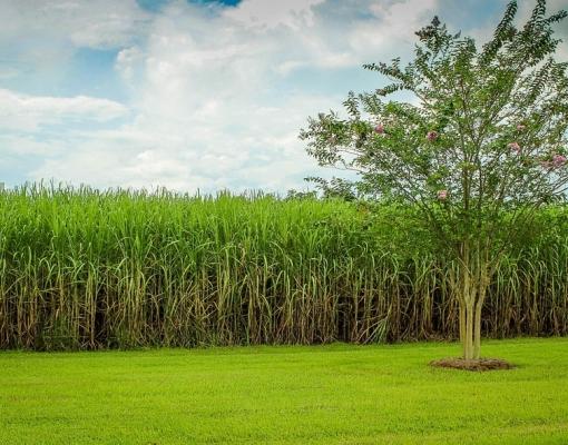 Safra de cana-de-açúcar deve terminar antes do esperado em 2020 no Centro-Sul, diz Unica