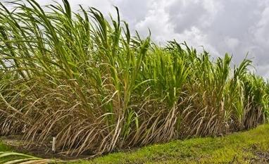 Cana-de-açúcar é o segundo setor que mais gerou empregos de janeiro a setembro