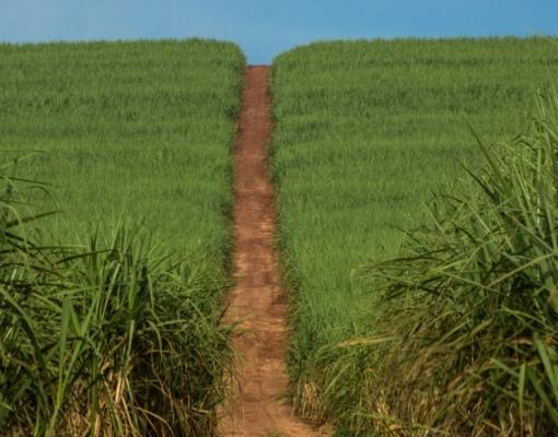 Falta de matéria-prima reduzirá produção de açúcar na safra 2021/22