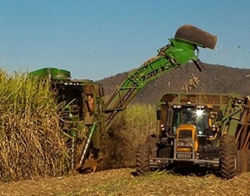 Biomassa pode socorrer o país durante crise hídrica