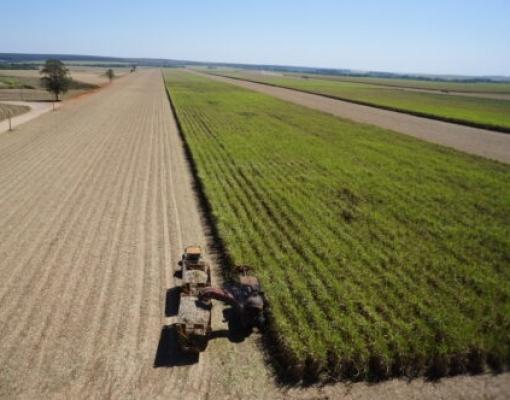 MME autoriza ampliação de oferta de energia por termelétricas à biomassa